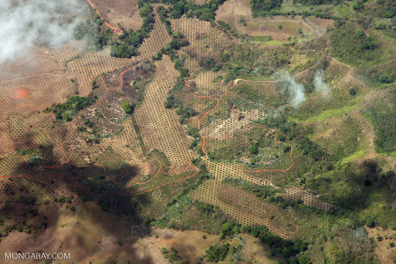 Plane view of new oil palm plantations in Costa Rica