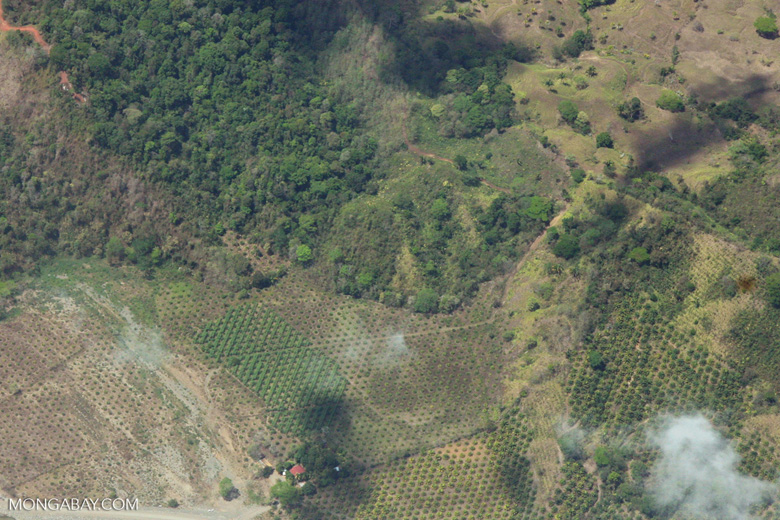 Plane view of new oil palm plantations in Costa Rica [costa-rica-d_0769]