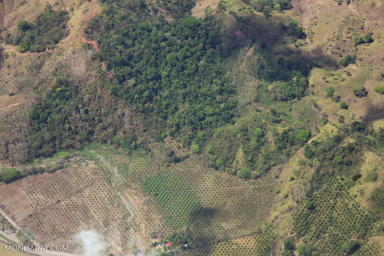Aerial view of new oil palm plantations encroaching on forest land in Costa Rica [costa-rica-d_0775]