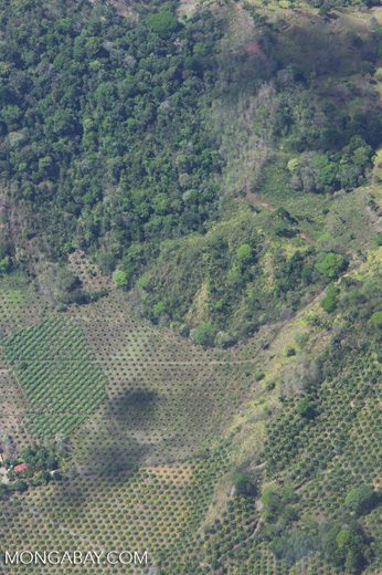 Aerial view of new oil palm plantations encroaching on forest land in Costa Rica [costa-rica-d_0779]