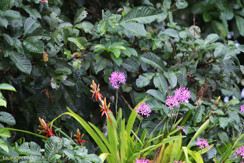 Flower bromeliad and lavendar orchids in Costa Rica [costa-rica_0147]