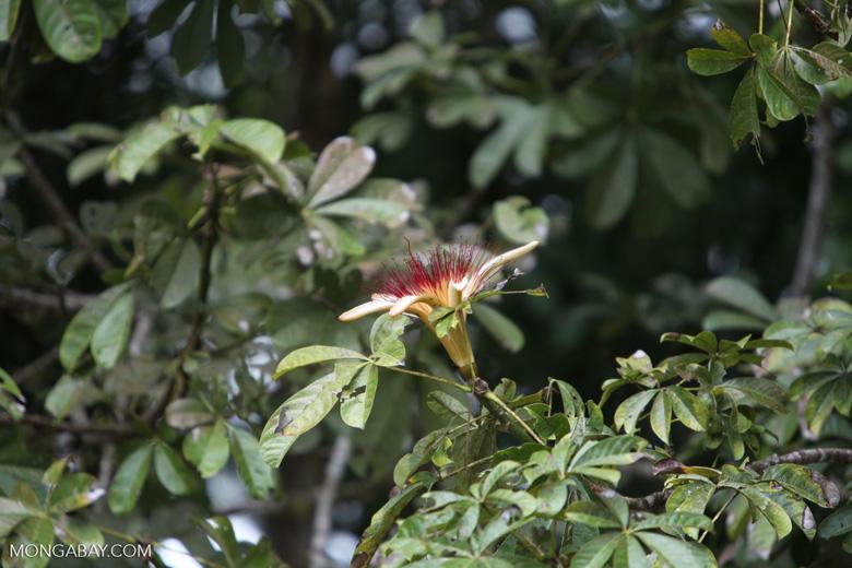 Flower [costa-rica_0225]