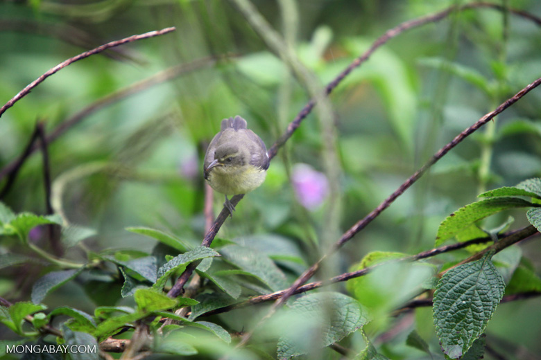 Bird [costa-rica_0382]