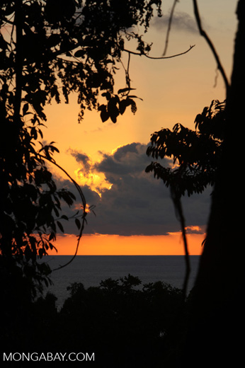 Sunset over the Pacific as seen through the Osa peninsula rainforest [costa-rica_0922]