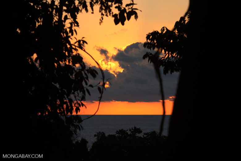 Sunset over the Pacific as seen through the Osa peninsula rainforest