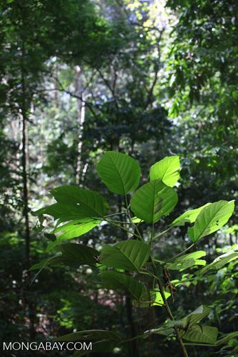 Rainforest leaves [costa-rica_0962]