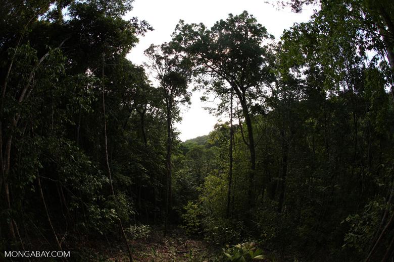 Fisheye view of the Costa Rican rainforest