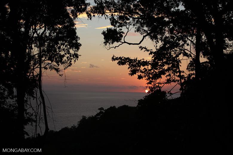 Sunset through the Costa Rican rainforest. Photo by Rhett A. Butler
