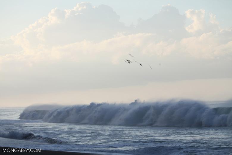 Pounding surf on a beach on the Osa Peninsula