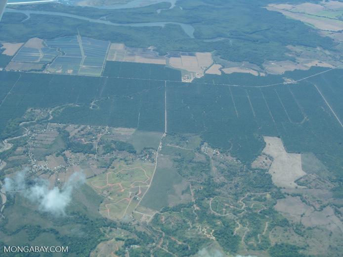 Industrial oil palm in Costa Rica [costa-rica_a_0075]