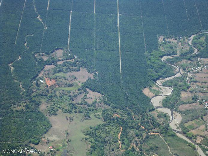 Industrial oil palm in Costa Rica [costa-rica_a_0079]