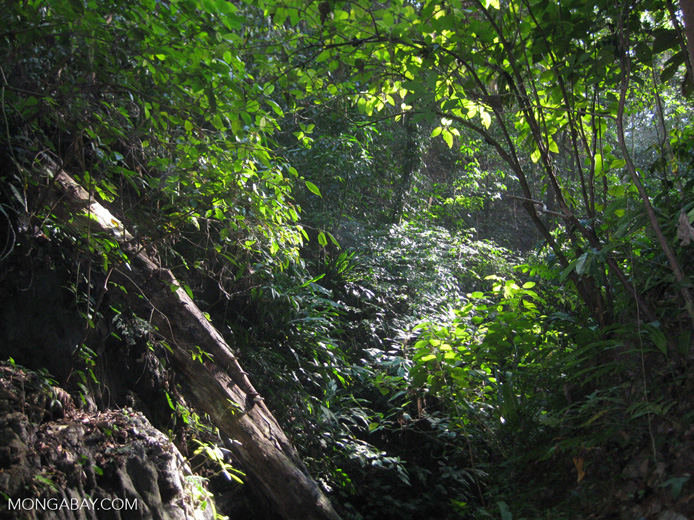 Tropical forest in southerm Costa Rica