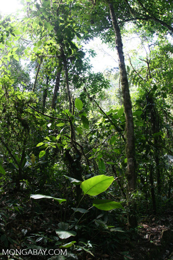 Costa Rican rainforest at Las Cruces