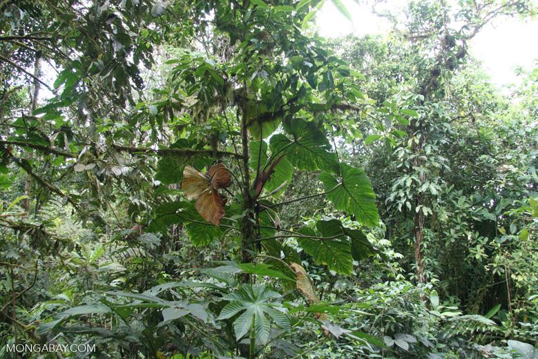 Rainforest leaves [costa_rica_4499]
