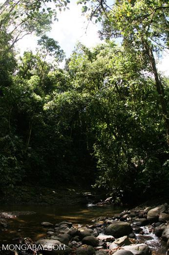 Costa Rican rainforest stream at Las Cruces