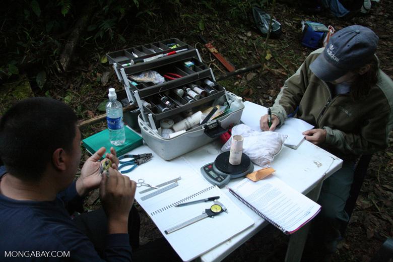 Bird researchers