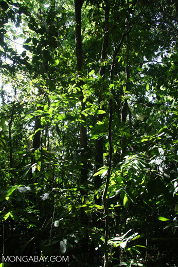 Pacific coast rainforest of Costa Rica