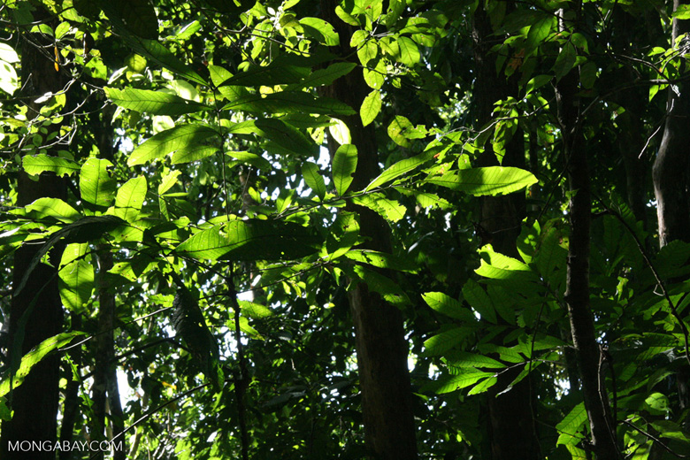Pacific coast rainforest of Costa Rica [costa_rica_5431]