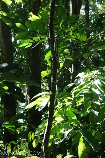 Pacific coast rainforest of Costa Rica [costa_rica_5433]