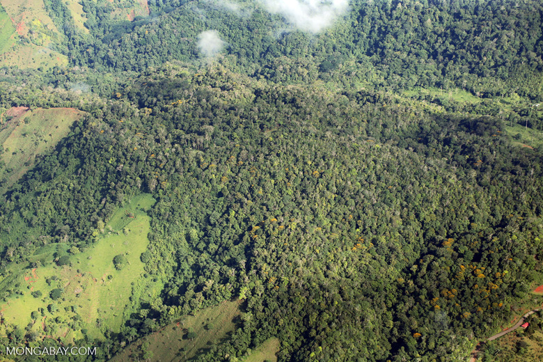Overhead view of rainforest in Costa Rica [costa_rica_aerial_0045]