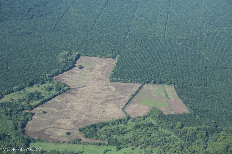 Airplane view of oil palm plantations in Costa Rica