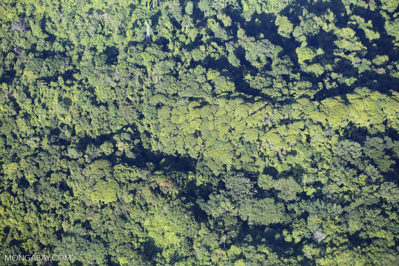 Airplane view of rain forest in Costa Rica [costa_rica_aerial_0064]