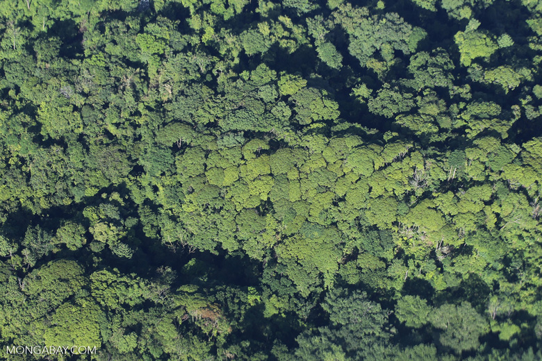 Aerial view of rainforest in Costa Rica [costa_rica_aerial_0069]