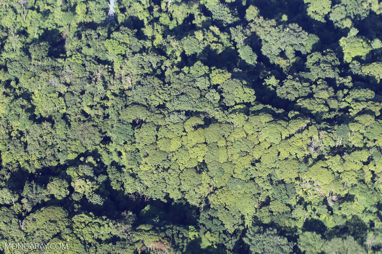 Aerial view of rain forest in Costa Rica [costa_rica_aerial_0070]