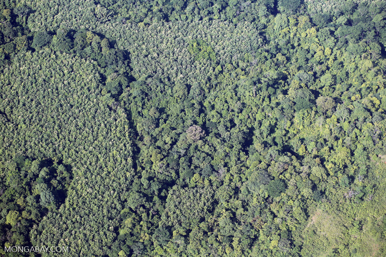 Airplane view of rainforest in Costa Rica [costa_rica_aerial_0073]