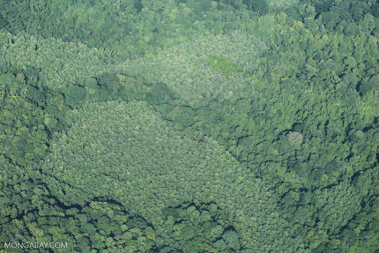 Airplane view of rain forest in Costa Rica [costa_rica_aerial_0080]