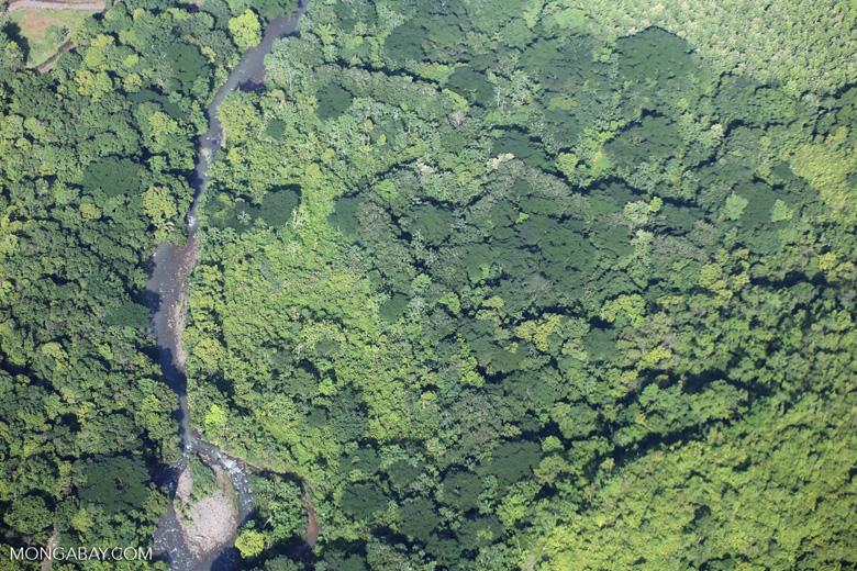 Aerial view of rain forest in Costa Rica [costa_rica_aerial_0082]