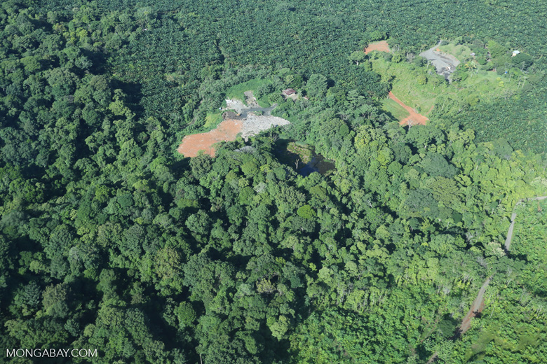 Aerial view of rainforest and oil palm plantations in Costa Rica [costa_rica_aerial_0101]