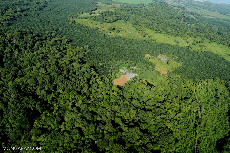 Aerial view of rainforest and oil palm plantations in Costa Rica
