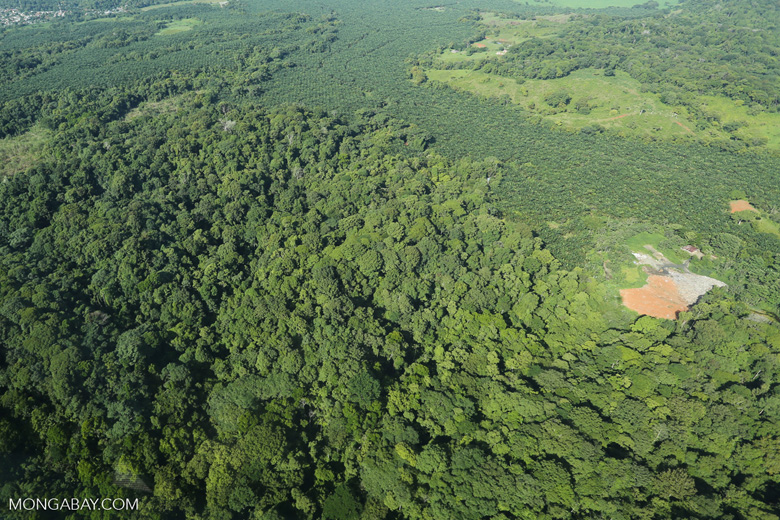 Aerial view of rainforest and oil palm plantations in Costa Rica [costa_rica_aerial_0109]