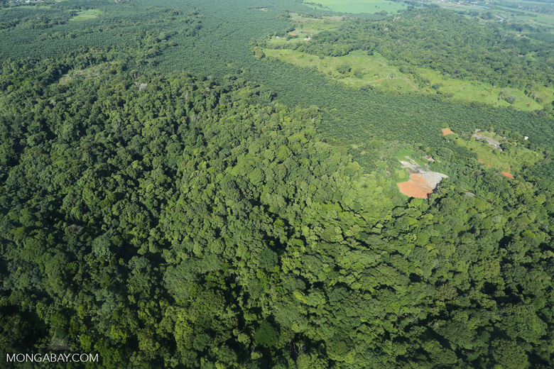 Aerial view of rainforest and oil palm plantations [costa_rica_aerial_0112]