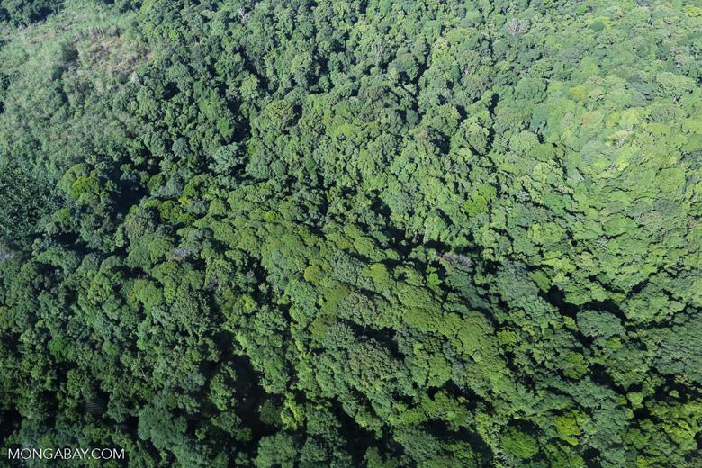 Aerial view of rainforest in Costa Rica [costa_rica_aerial_0117]