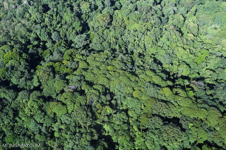 Aerial view of rain forest in Costa Rica [costa_rica_aerial_0118]