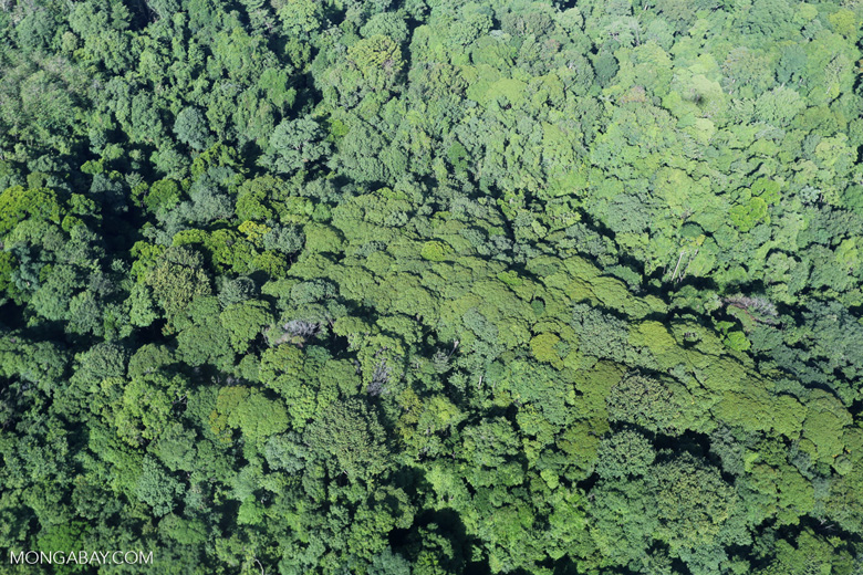 Overhead view of rain forest in Costa Rica [costa_rica_aerial_0120]