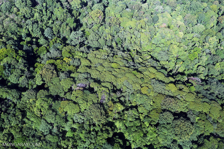 Airplane view of rain forest in Costa Rica [costa_rica_aerial_0122]