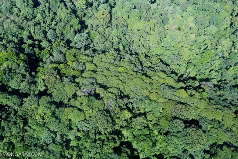 Aerial view of rainforest in Costa Rica [costa_rica_aerial_0123]