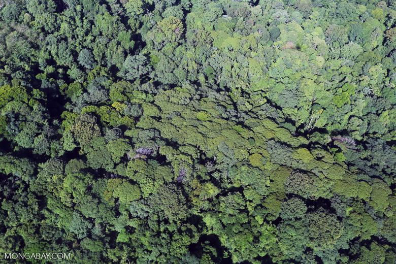 Aerial view of rain forest in Costa Rica [costa_rica_aerial_0124]