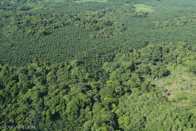Aerial view of rainforest and oil palm plantations in Costa Rica [costa_rica_aerial_0131]