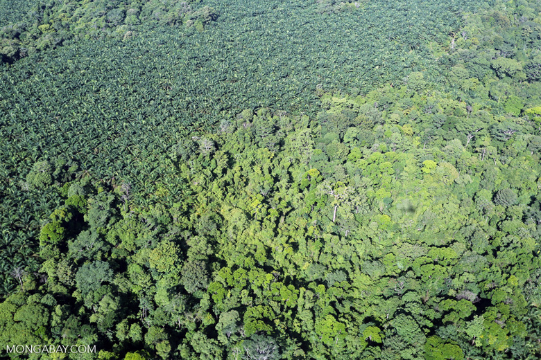 Aerial view of rainforest and oil palm plantations in Costa Rica [costa_rica_aerial_0141]