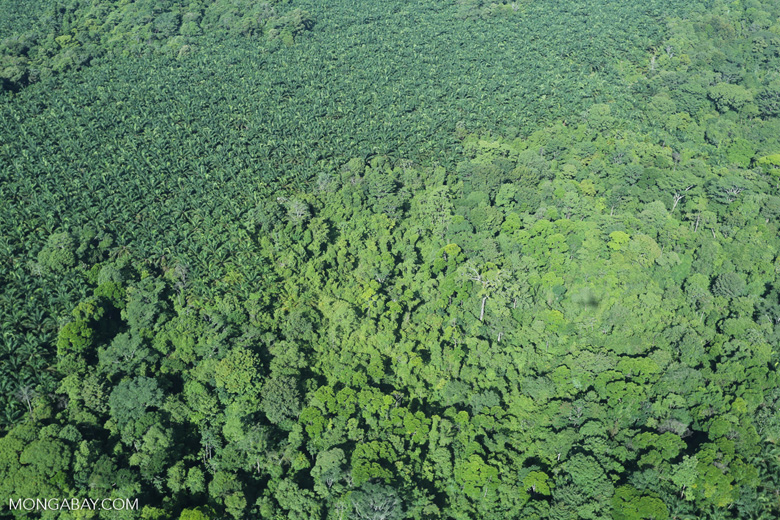 Aerial view of rainforest and oil palm plantations [costa_rica_aerial_0142]