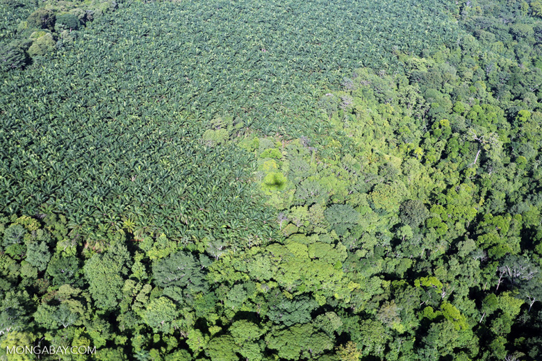 Aerial view of rainforest and oil palm plantations in Costa Rica [costa_rica_aerial_0143]