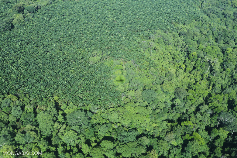 Aerial view of rainforest and oil palm plantations in Costa Rica [costa_rica_aerial_0145]