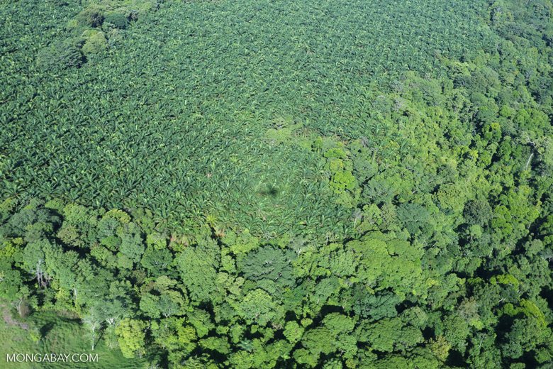 Aerial view of rainforest and oil palm plantations [costa_rica_aerial_0148]