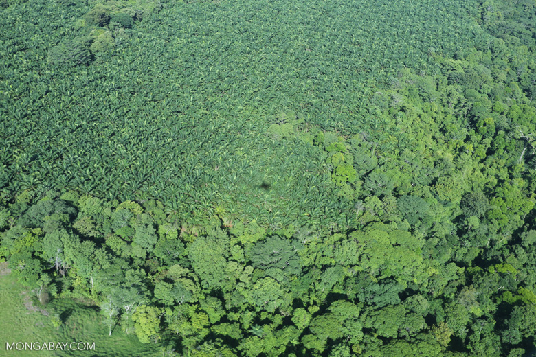 Aerial view of rainforest and oil palm plantations [costa_rica_aerial_0150]