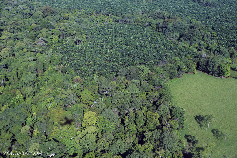 Aerial view of rainforest and oil palm plantations [costa_rica_aerial_0156]