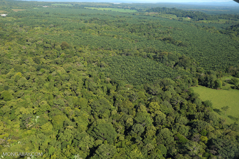 Aerial view of rainforest and oil palm plantations [costa_rica_aerial_0160]